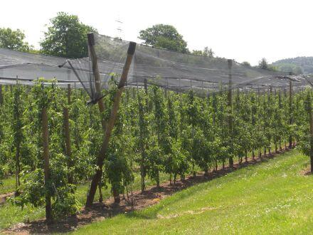 Hagelschutznetz - 60 Gramm-Qualität 4,00 m x 100 m