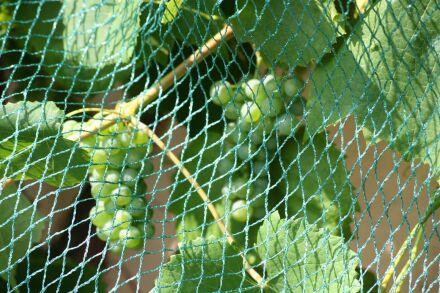Vogelschutznetz - Maschenweite 13 mm - grün -...