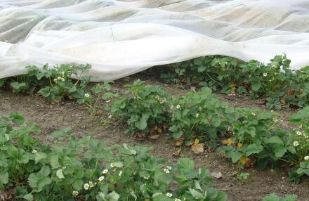 Insektenschutznetz - weiß - 12 x 100 m