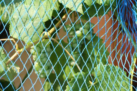 Vogelschutznetz - Maschenweite 30 mm - blau