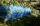 Wespenschutznetz - Maschenweite 9 x 3 mm - hellblau
